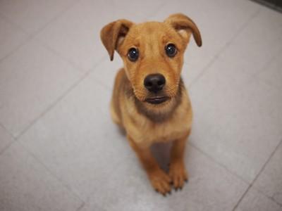 犬は人の言葉をどれくらい理解してるの とある実験で得た結果と経験談