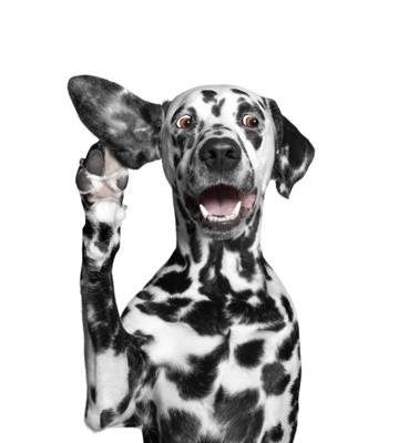 犬が耳で反応している