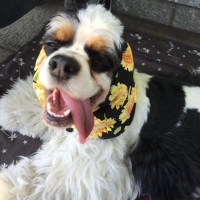 愛犬の変顔写真14枚目