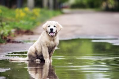 犬と水たまり