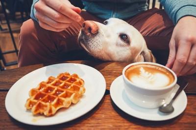 カフェでくつろぐ男性の下から顔をのぞかせる犬