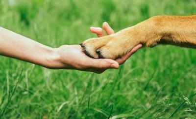 つないでいる人間と犬の手