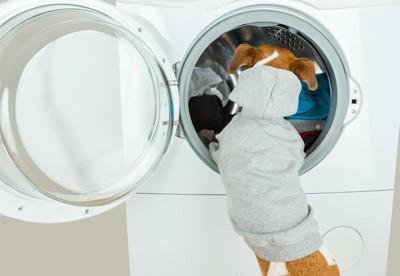 洗濯機の中を覗く犬の後ろ姿