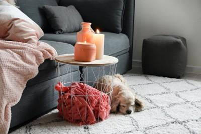 アロマキャンドルのそばで眠っている犬