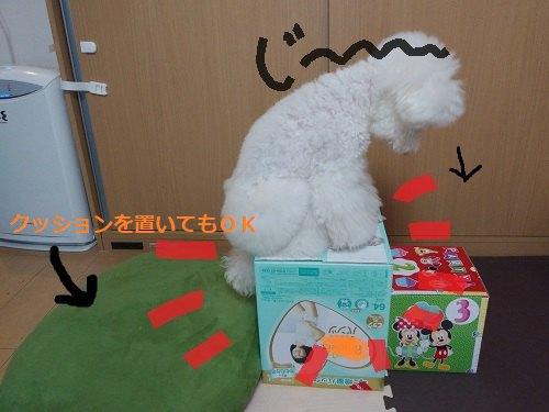 緑の丸いクッション 大小の箱 白い犬が乗っている