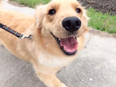 笑顔の愛犬
