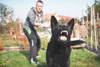 吠える黒い犬のリードを引く男性