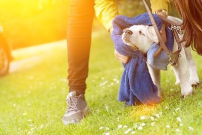 体を拭かれる犬