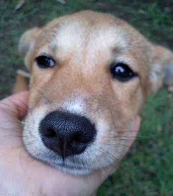 茶色い仔犬