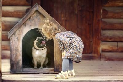 犬小屋の犬を覗く少女