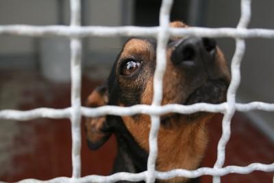 犬舎の中の犬の顔アップ