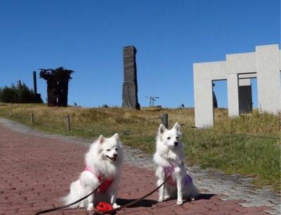 彫刻の前の犬