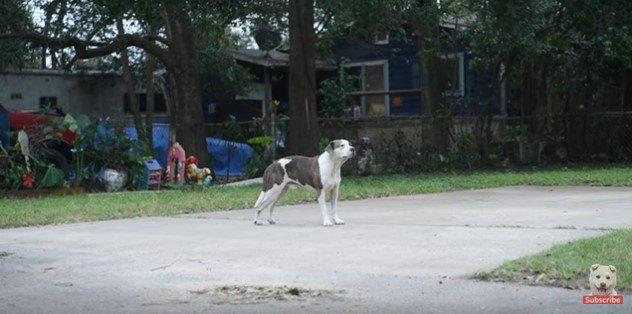 ぼんやりと立ちすくむ犬