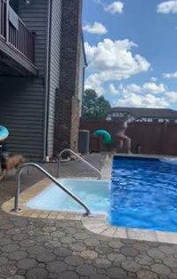 プールに飛び込む人