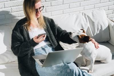 パソコンとスマホを見る人と犬
