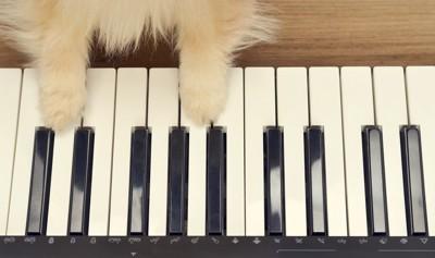 犬の手と鍵盤