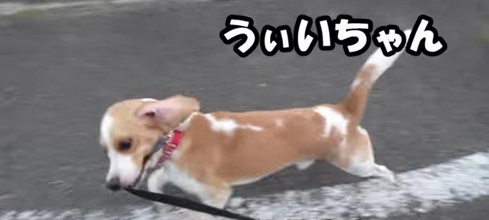 うぃいちゃん