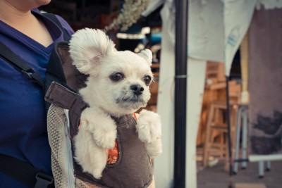 スリングで抱っこされる犬