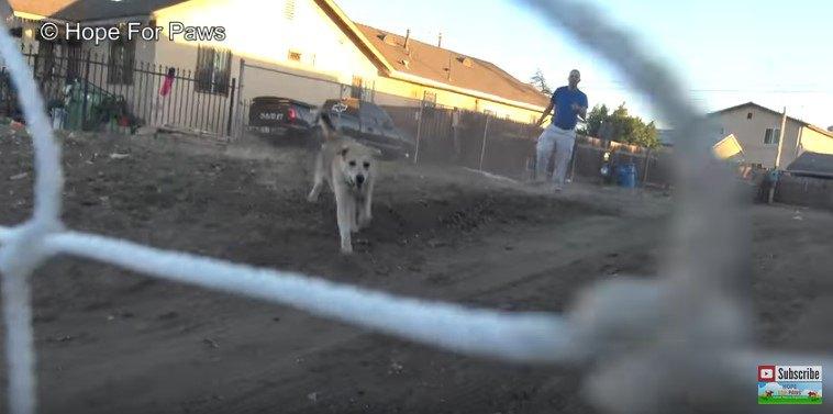 網に向かって走ってくる犬