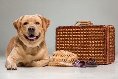 旅行鞄とラブラドール