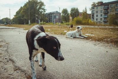放浪する犬たち