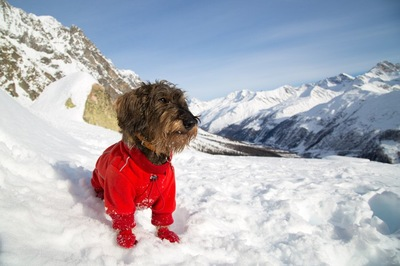 雪山で赤い防寒着を着る犬