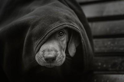 モノトーンで悲しそうな子犬