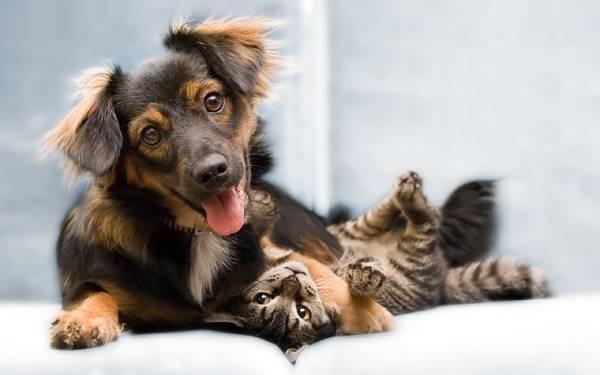 犬と猫が隣で座っている写真