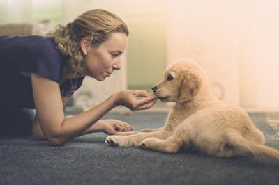 犬をしつける女性