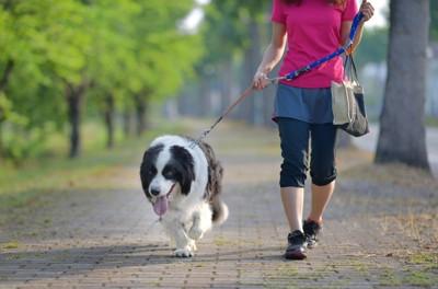 散歩中飼い主を引っ張っている犬