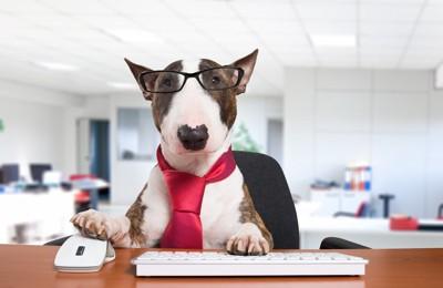 オフィスでPCを操作する犬