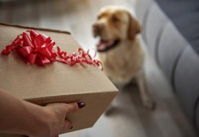 犬とプレゼントの箱