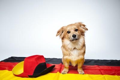 ドイツ国旗の上に座っている犬