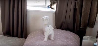 窓を覗くちゅーぶくん
