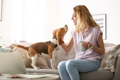 コーヒーカップを片手に持つ女性と犬