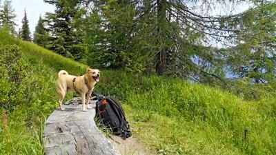 ベンチの上に立つ犬とリュック