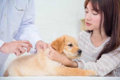 病院で獣医師に注射される犬