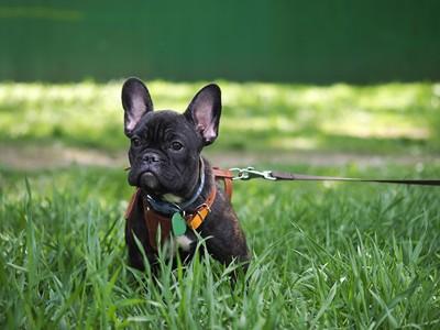 草むらに座るお散歩中の犬