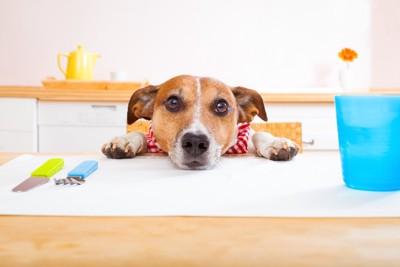 テーブルの上に顔を乗せてご飯を待つ犬