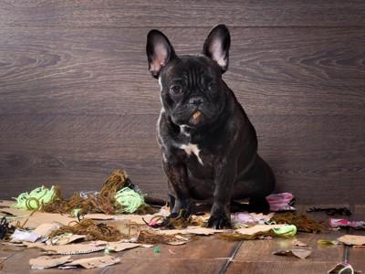 ゴミを散らかす犬