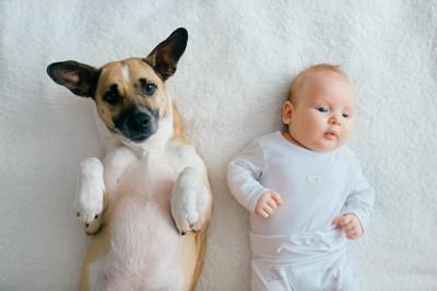仰向けになっている犬と赤ちゃん