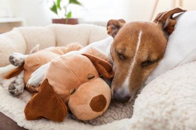 ぬいぐるみと気持ちよさそうに眠る犬