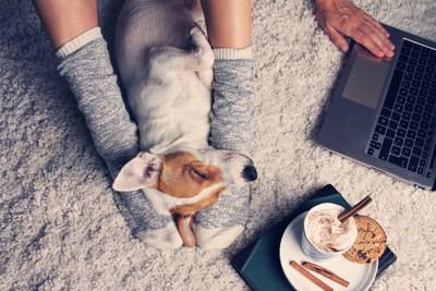 パソコンを使う飼い主の足の間にいる犬