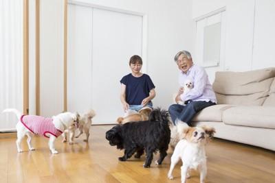 たくさんの犬と夫婦