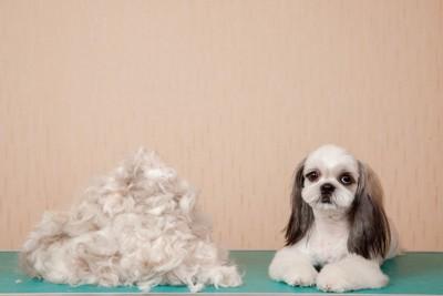 犬と抜け毛