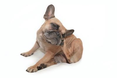 後ろ足で顔を掻いている犬