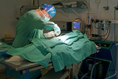 手術室で犬に処置をする獣医師