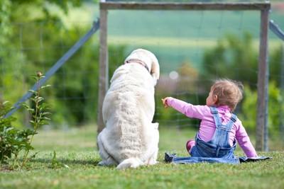 座っている犬を触ろうとする子供