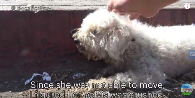 人の手を受け入れる犬