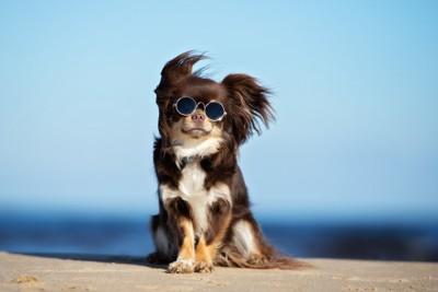 サングラスをかけて風に吹かれる犬